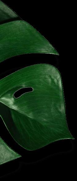 Dream Sofa Leaf